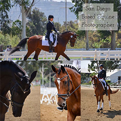 Andie Whisler - a Southern California based equine photographer. With low prices and a great eye for photography I'm sure that I'll make you happy!  Contact me for more info on this great deal.