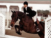 Sandie Springer Stables, Lessons / Boarding / Training / Horse Leasing / Horse Shows / Domestic and international horse sales