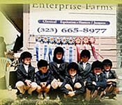 Enterprise Farms ~ Pony Club