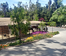 Rancho Vista Stables is a private equestrian facility located off Sycamore in Vista. This clean, quiet and relaxed center is designed to provide the perfect environment for you and your horse.